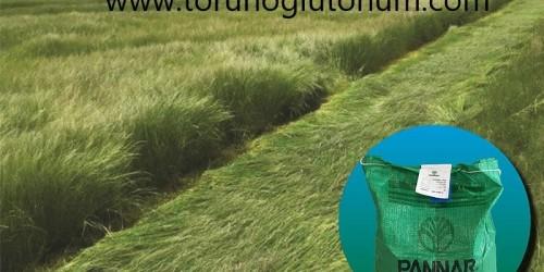 Ot Tipi Teff Grass Ot Verimi