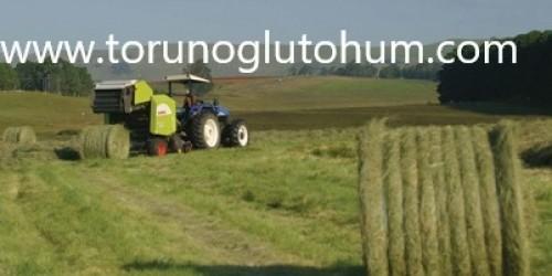 Teff Grass Rooiberg Tohum Fiyatı